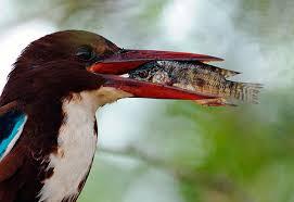 Rathika Ramasamy wildlife