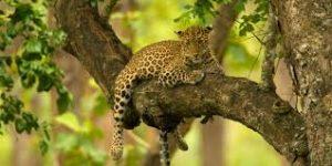 Sudhir Shivaram wildlife photography